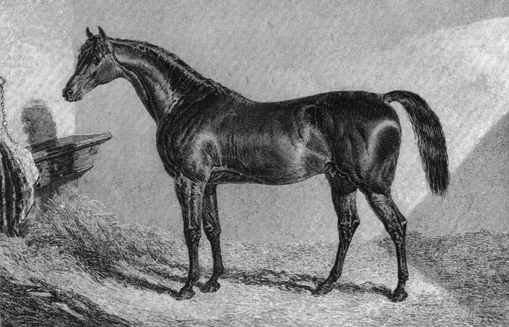Dover @ Glendon in 1836 This is one of the very early images of a thoroughbred stallion in the Hunter Valley