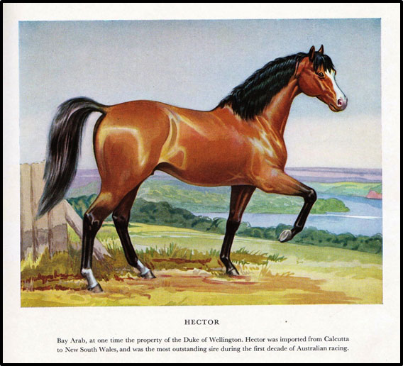 Courtesy of Douglas M Barrie 'The Australian Bloodhorse'; from a watercolour impression by the author