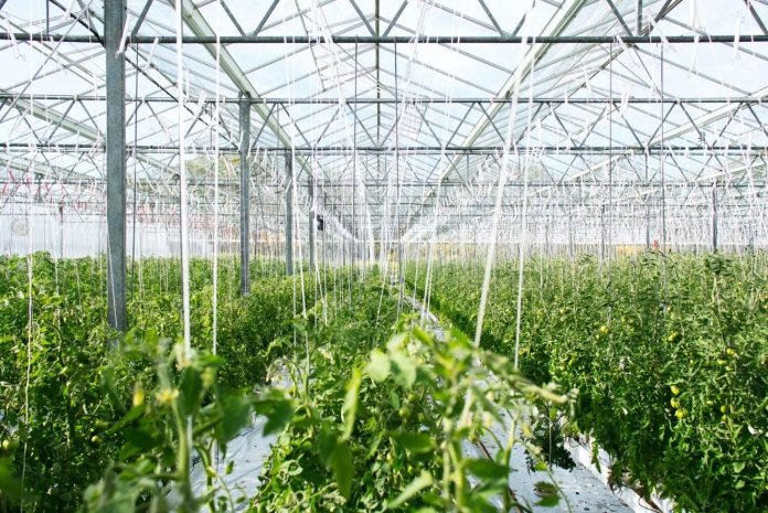 Part of the Cleveland Model: The Evergreen Cooperatives operate the largest urban glasshouse facility in the United States, supplying the Cleveland population with fresh local vegetables.