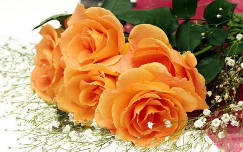 Beautiful Flowers Wallpapers for mobile 2013 Collection