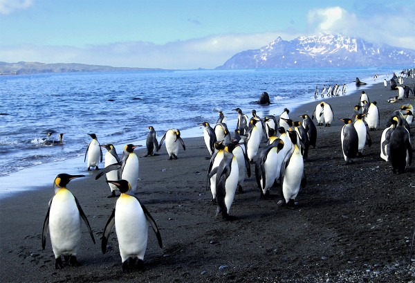 penguinswalk-600x409