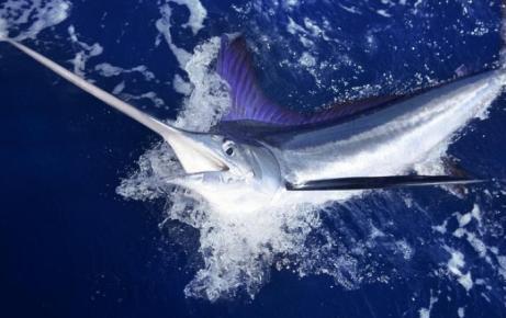deep_sea_fishing_florida