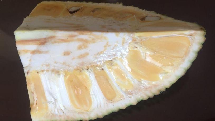 jackfruit in Cai be