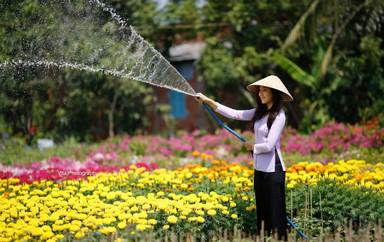 flower-farmer-is-watering-colorful-flowers-for-tet