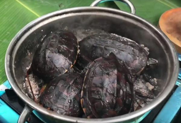 Toasted turtle with salt - Specialty foods of Ca Mau