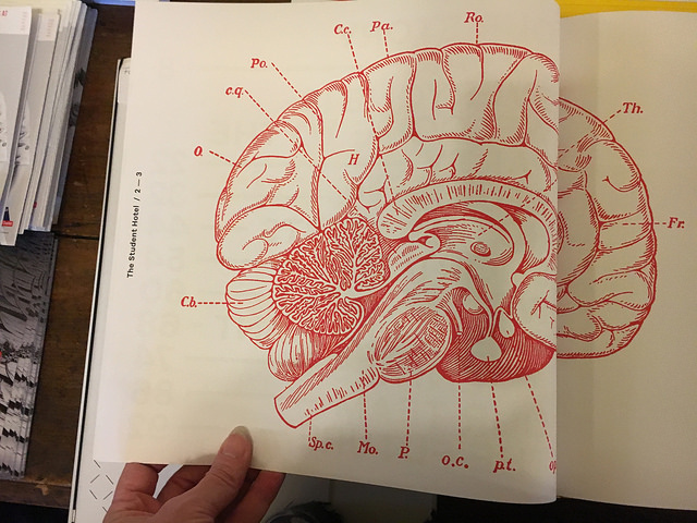 Diagram Of The Left Brain And The Right Brain Including Their Brain