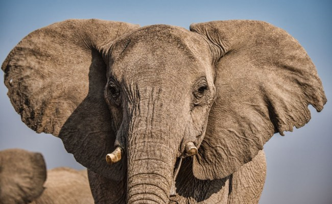 Eavesdropping On Elephants In The Name Of Research Scope