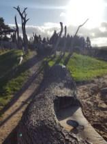 Natural Play Area at Gordon Castle Walled Garden