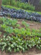 WW2 Garden