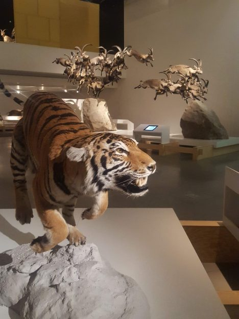 Tiger - Granada Science Park