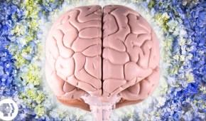 The Neuroscience of Creativity: A Q&A with Anna Abraham