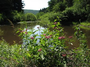 Small pond and wild flowers
