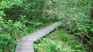 Foot bridge over marshy ground