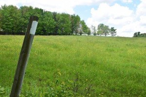 Field near Laine Road