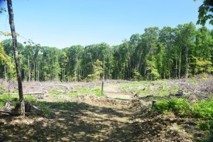 Swift Hill State Forest Timber Management Area