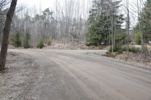 Looking north-west on Pete HIll Rd at trailhead