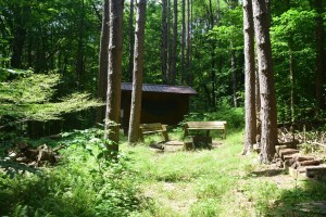 Bucktooth State Forest Lean-to, east of W. Branch Bucktooth Hollow Rd