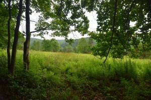 Field west of E. Branch Bucktooth Hollow Rd