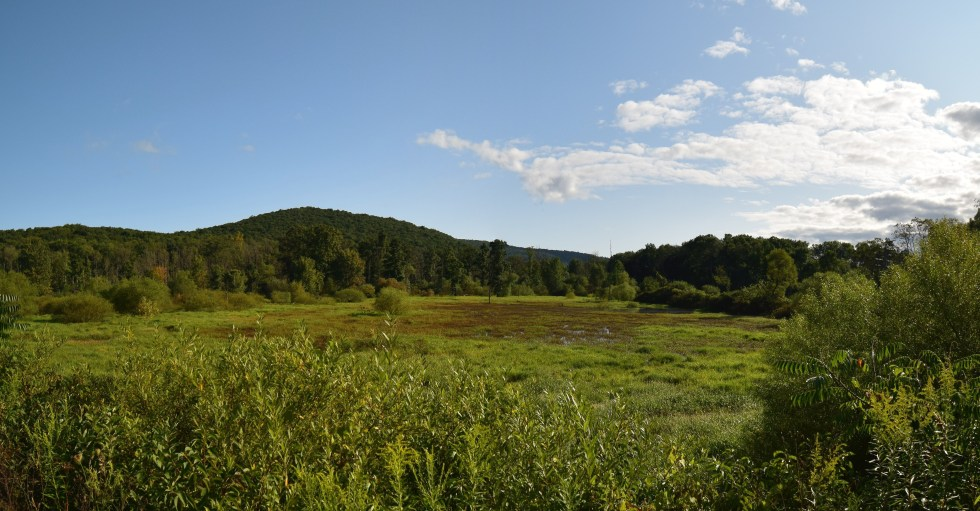 Looking north-east out over a marsh along Sawmill Run Rd