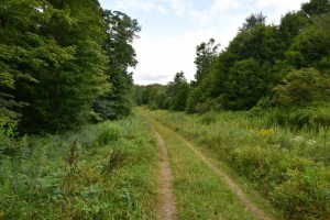 Old forest track between Sawmill Run Rd and W. Branch Bucktooth Hollow Rd (reroute around logging closure)