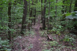 Trail heading straight ahead, descending down along a ridge line in Allegany State Park