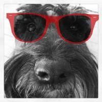 Friday's Foto Fun and Puppy Breath