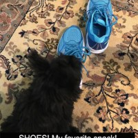 Friday's Foto Fun - Sherlock's Shoes