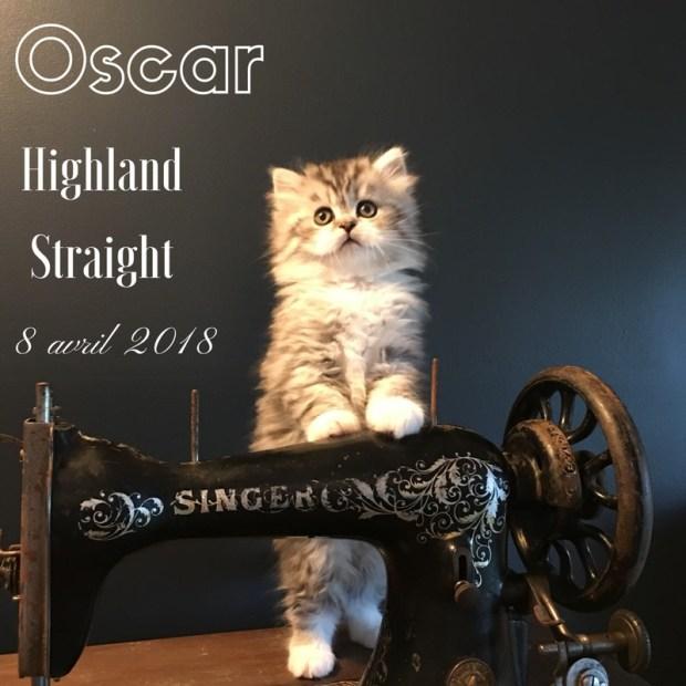 chaton highland straight oscar