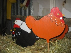 A different kind of chook!