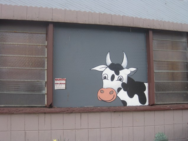 A cow saying hello in Moo Moo