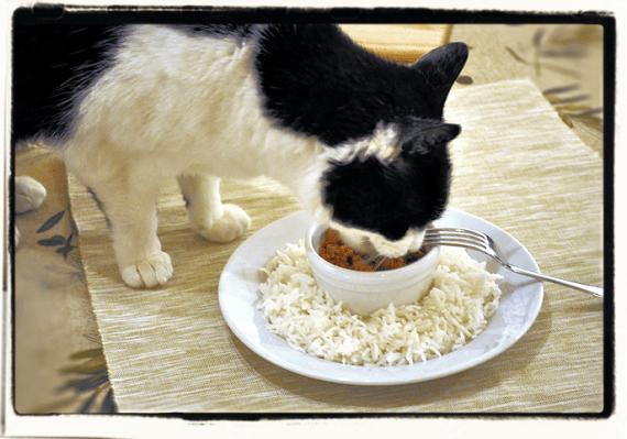 Cat Steals Foodie Set Up