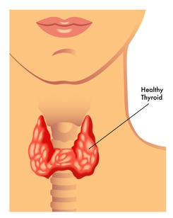Healthy Thyroid