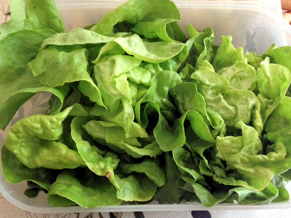 Plot Lettuce