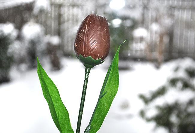 coop chocolate tulip