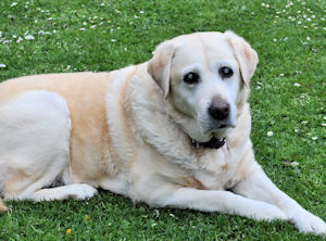 Project 366 Day 3/365 – My old lady resting on the grass.