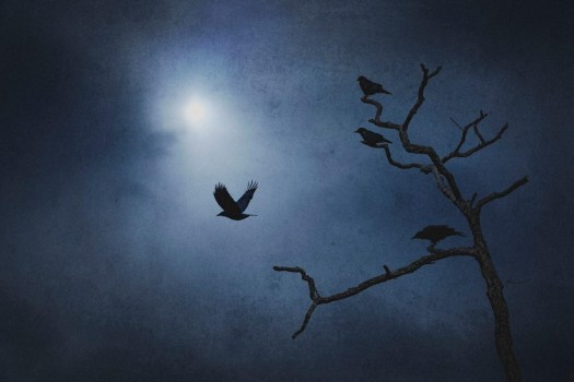 Crows Funeral by Michael Gomez