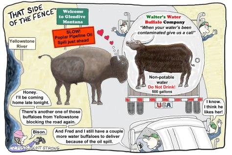 Buffaloes in Love.jpg