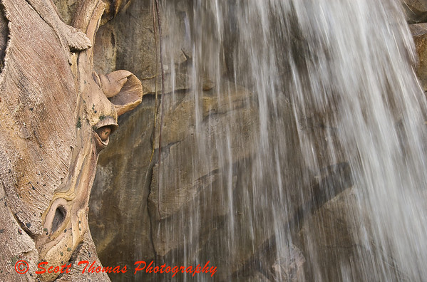A carving of a giraffe peeks out from the roots of the Tree of Life in Disneys Animal Kingdom.