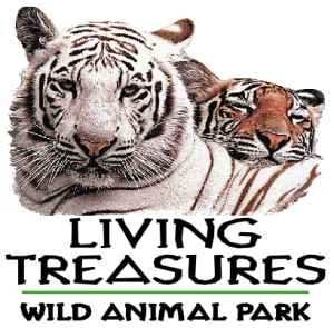 Living_Treasures_Tiger