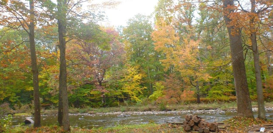 Creek-Pic(Background)
