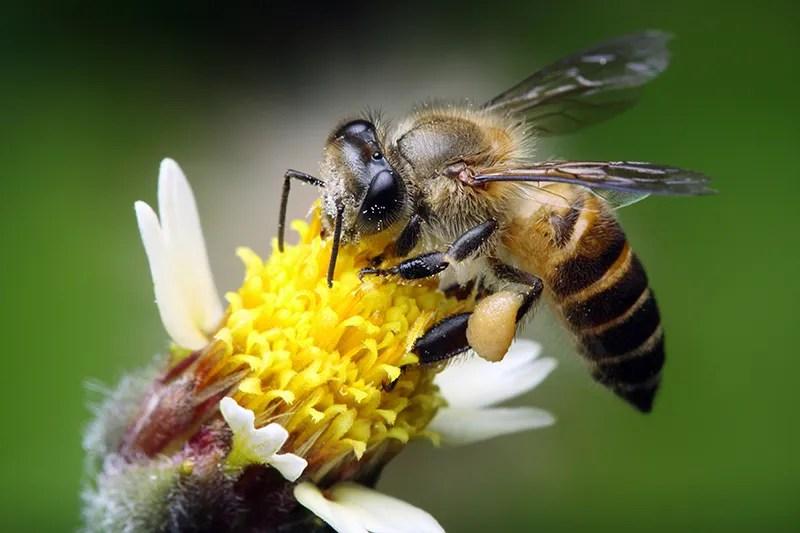 Bee Sting