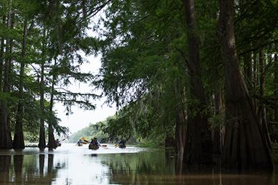 SwampBaseBayou
