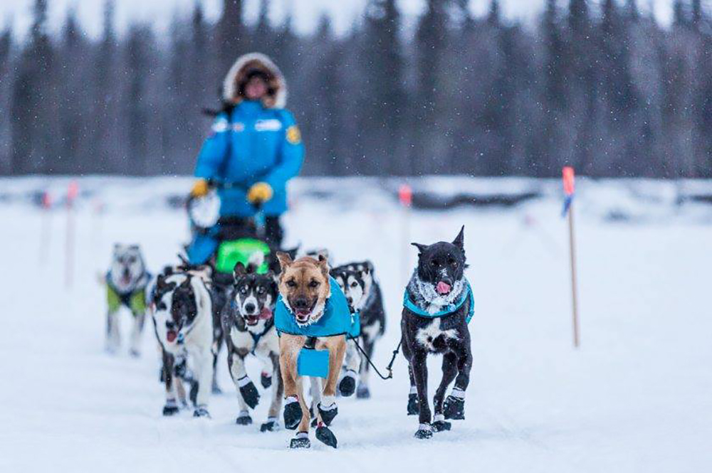 Matthew-Failor-Racing-Iditarod
