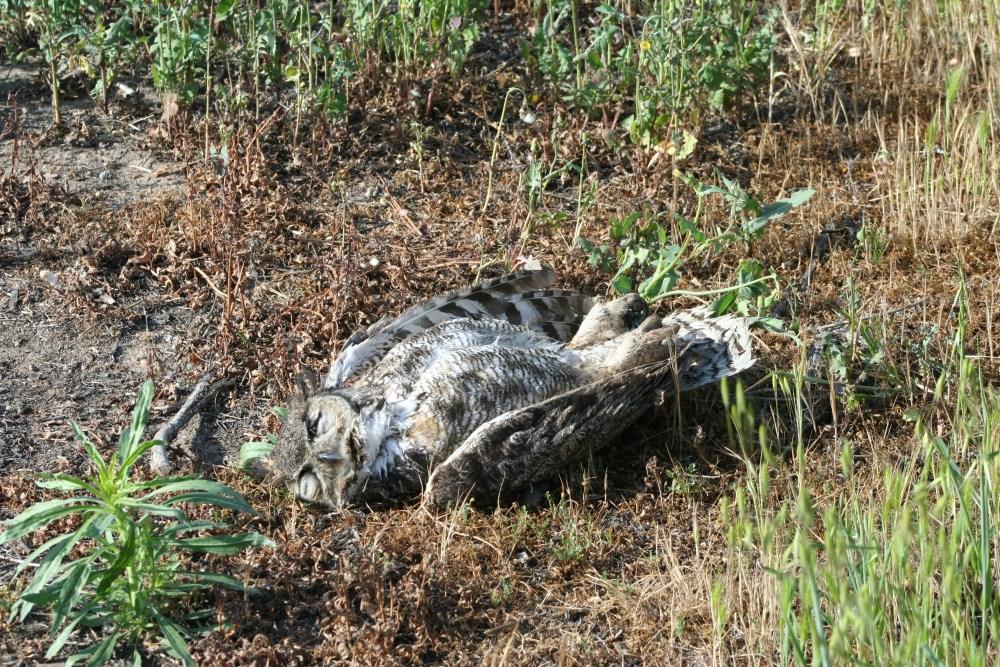 Dead Owl Society (1/3)
