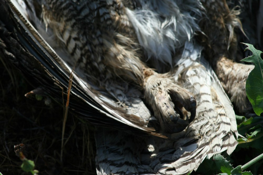 Dead Owl Society (3/3)