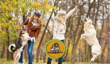 dog care merit badge guide