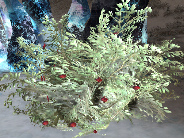 Guild Wars 2 winterberry bush