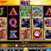 Scr888 Casino Online Slot Game free download - CATS