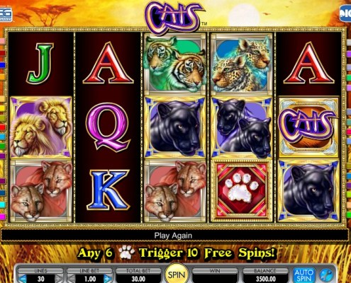 free casino game cats