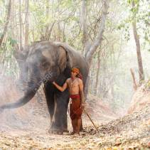 Relationship a man, mahout Of elephant. Parenting with Love. atmosphere with smog
